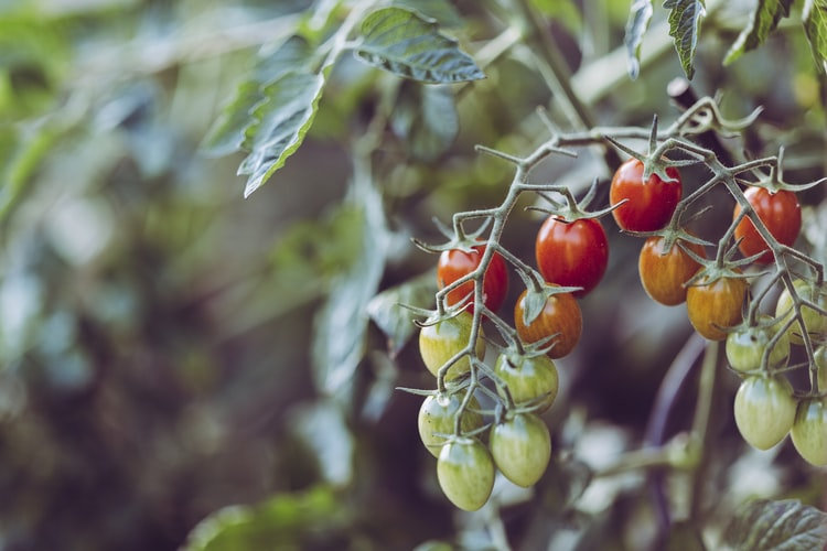 staying connected with nature thru gardening